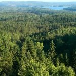 Beautiful Green Wooded Area in Sweden Stable Port in Scandinavia