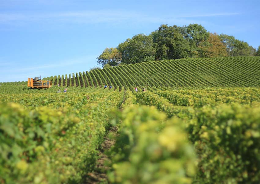 France World Known For Champagne Wines And Cheeses Magnificent Vineyard In Reims