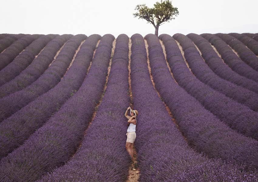 La Douce France Beautiful Lavender Fields Beautiful Country